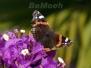 Andalusien - Schmetterlinge