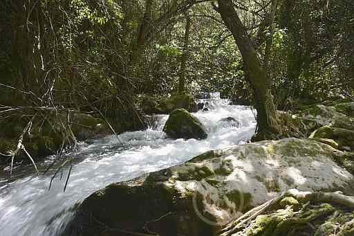 0193-Rio del Bosque