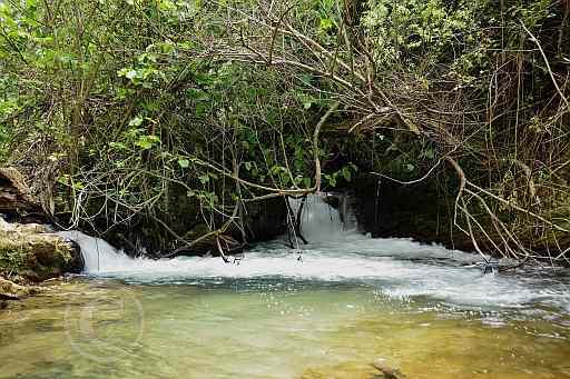 0195-Rio del Bosque