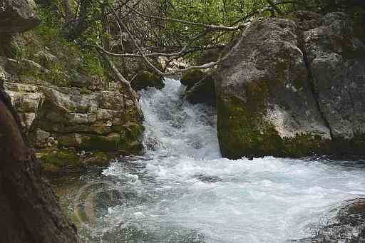 0196-Rio del Bosque