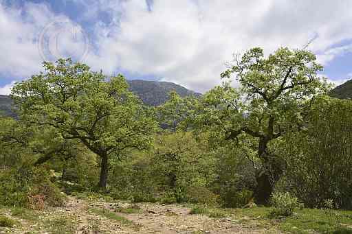 0204-Janos del Campo - Arroyo del Ahijadero