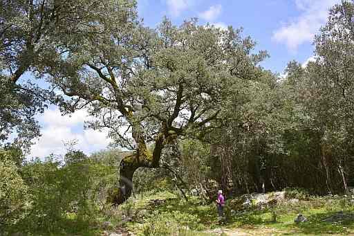 0205-Janos del Campo - Arroyo del Ahijadero