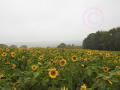 Nebelblick vom Homberg