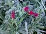 Zypern - Blumen