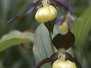 Orchideen-Heimisch