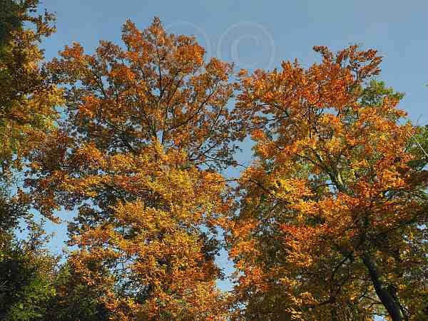 011-Herbstlichter am Reesberg