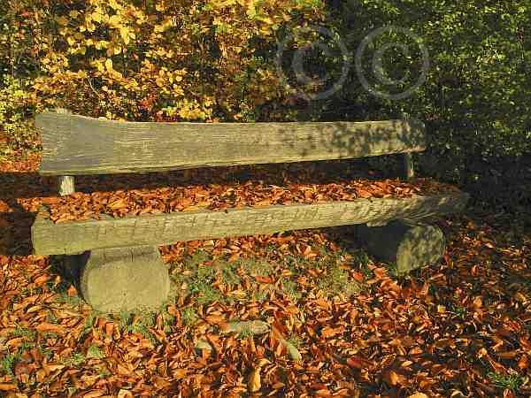 012-Bank im Herbstlaub-Schweichler Wald