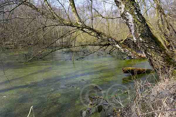 Hiller-Moor im April