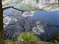 Spiegelung im Hiller Moor