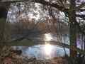 042 Hiller Moor im Gegenlicht bei Frost