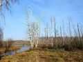 Winterstarre im Moor