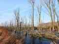 046 Moorlandschaft eingefroren