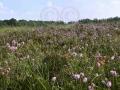 Heidefläche