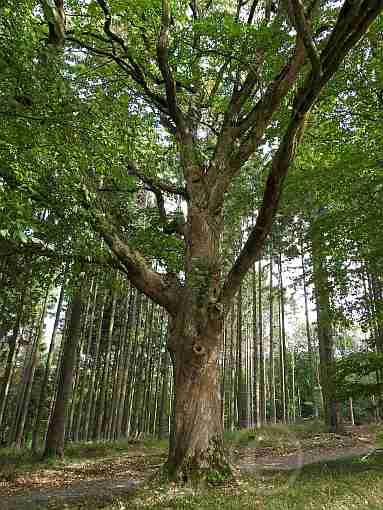 010-Naturdenkmal am A5