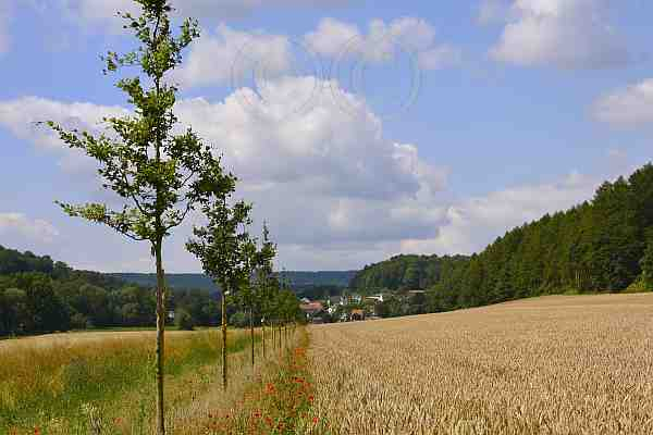 085-Himmighausen A6