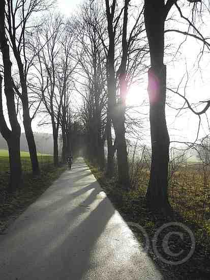 105-Gegenlicht am Mühlenbach M-Weg Sandebeck