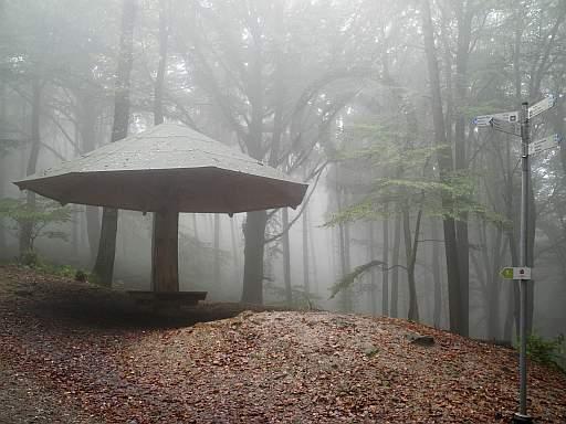 Rast im Nebel bei Brochterbeck