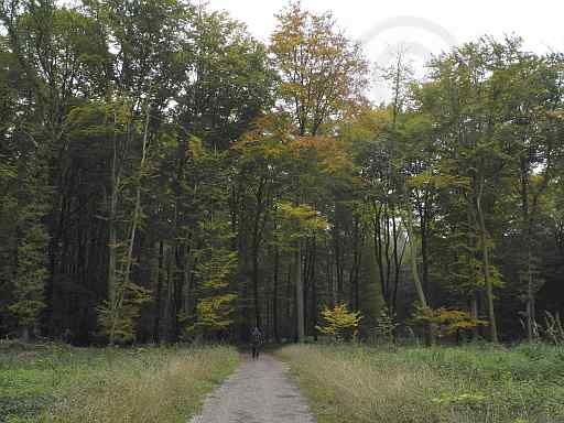 H-Weg Malepartus-Bad Iburg