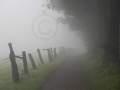 Hermannsweg in Nebelstimmung