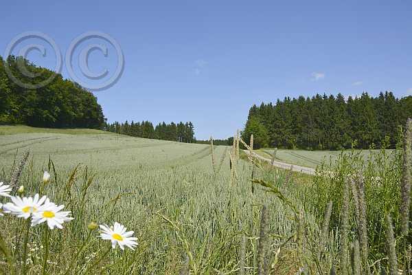 052-kalletalpfad-luedenhausen-2