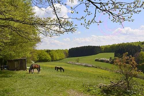 A6 Schwelentruper-Höhenweg-Steinberg