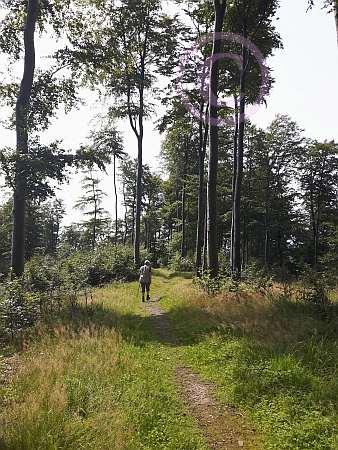 A6 Schwelentruper Höhenweg