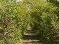 A6 Naturdenkmal-Hohlweg