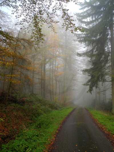 010 Eggeweg im Nebel