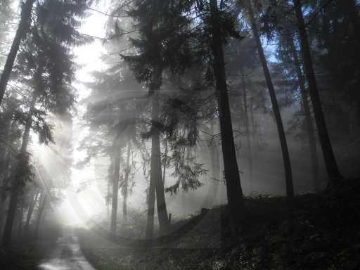 012 Nebel am Eggeweg