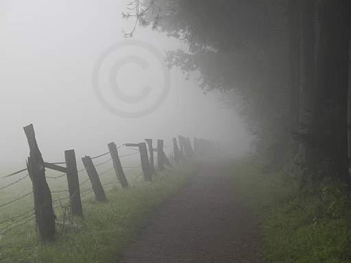 020-Hermannsweg in Nebelstimmung