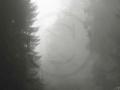 011 Nebel am Eggeweg