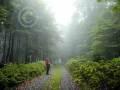 Uplandsteig-Krutenberg im Nebel