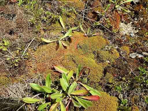 035-Moose und Flechten am Boden der Bleikuhle