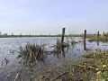 Gewässerte Feuchtwiesen