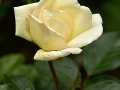 rosen-0014