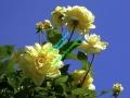 rosen-0041
