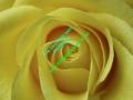 rosen-0045