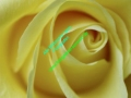 rosen-0046