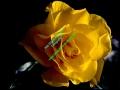 rosen-0047