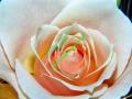 rosen-0052