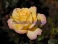 rosen-0165