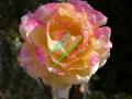 rosen-0023