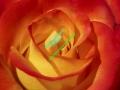 rosen-0029