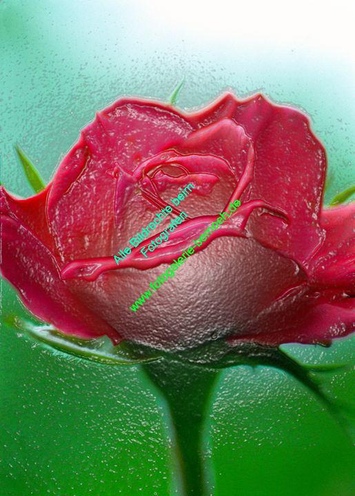 rosen-0001