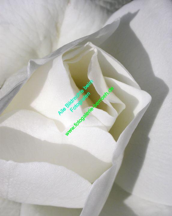 rosen-0018