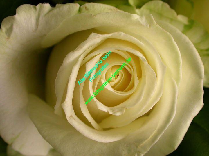 rosen-0025