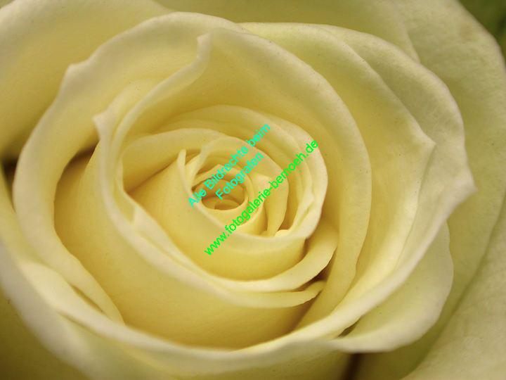 rosen-0026