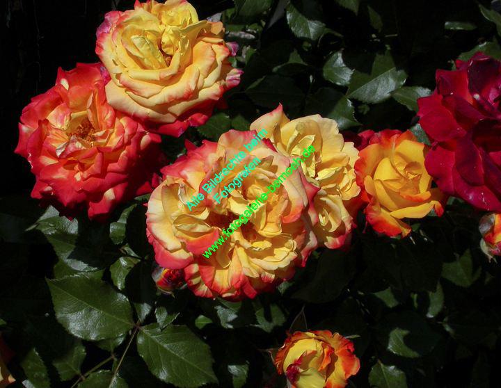 rosen-0031