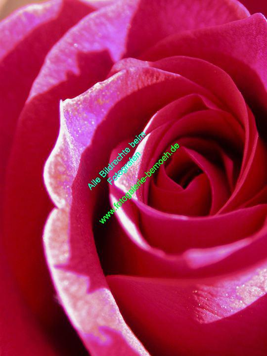 rosen-0033