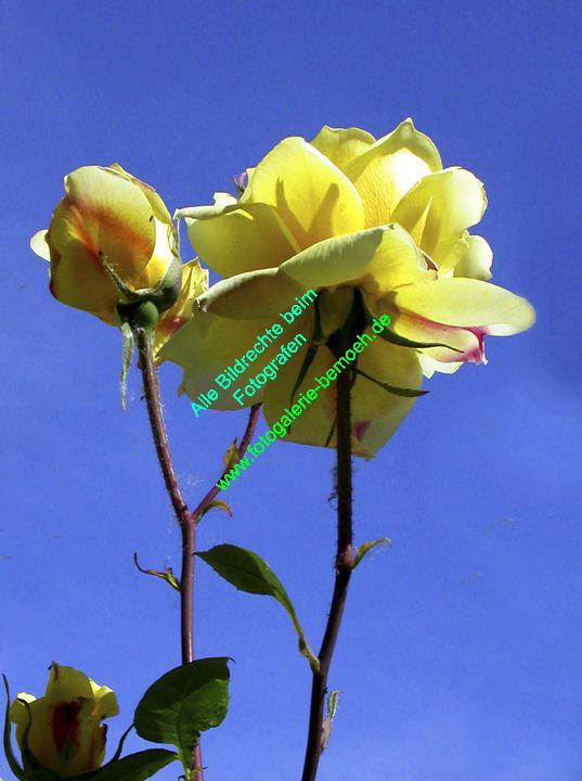rosen-0040